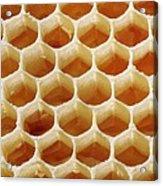 Honey In Wax Honeycomb Cells Acrylic Print