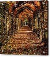 Hornbeam Alles, Birr Castle, Co Offaly Acrylic Print