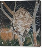 Hornet's Nest Acrylic Print by Terry Forrest