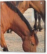 Horse-32 Acrylic Print