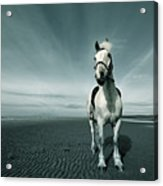 Horse At Irvine Beach Acrylic Print by Mikeimages