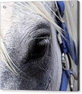 Horse At Mule Day Benson Acrylic Print