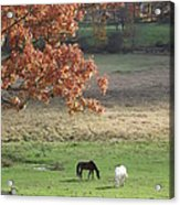 Horse Barn Hill Pasture Acrylic Print