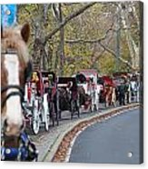 Horse-drawn Carriages Acrylic Print