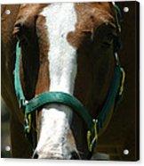 Horse Face Acrylic Print