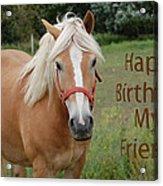 Horse Friend Birthday Acrylic Print