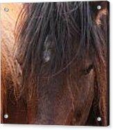 Horse Hair 2 Acrylic Print
