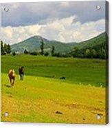 Horse Heaven Acrylic Print