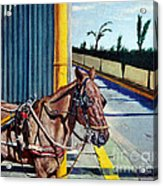 Horse In Malate Acrylic Print