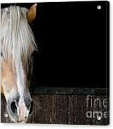 Horse In The Stable Acrylic Print