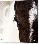 Horse Mare Saskatchewan Field Acrylic Print