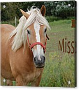 Horse Miss You Acrylic Print