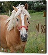 Horse Miss You Acrylic Print