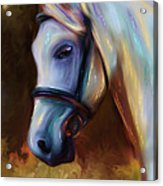 Horse Of Colour Acrylic Print