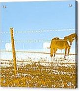 Horse Pasture Revblue Acrylic Print