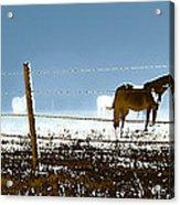 Horse Pasture Revdkblue Acrylic Print