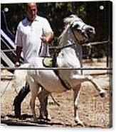 Horse Training Acrylic Print