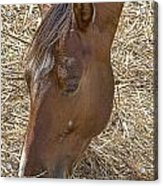 Horse With No Name Acrylic Print