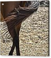 Horse With No Name V4 Acrylic Print