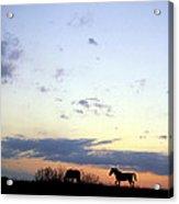 Horses And Sky Acrylic Print