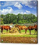 Horses At The Ranch Acrylic Print