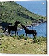Horses By The Sea Acrylic Print