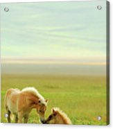 Horses Foals In Field Acrylic Print by Vittorio Ricci - Italy