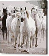 Horses Galloping Acrylic Print