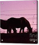 Horses Grazing At Dawn  Acrylic Print