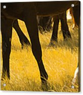 Horses Grazing Acrylic Print by Donovan Reese