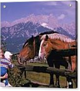Horses In Switzerland Acrylic Print