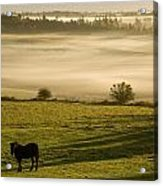 Horses In The Morning Mist, North Acrylic Print