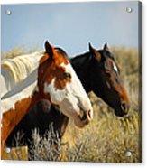 Horses In The Wild Acrylic Print