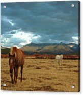Horses In Winter Landscape  Truchas, New Mexico Acrylic Print by Mary Hockenbery