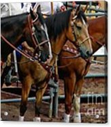 Horses Acrylic Print by Michelle Frizzell-Thompson