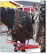 Horses Of Mackinac Acrylic Print