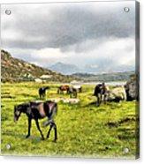 Horses Of Wyoming Acrylic Print