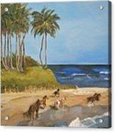 Horses On The Beach Acrylic Print