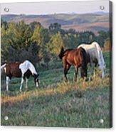 Horses On The Range Acrylic Print