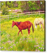 Horses Paradise Acrylic Print