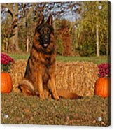 Hoss In Autumn II Acrylic Print