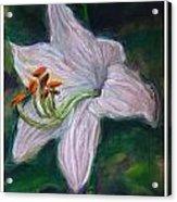 Hosta Bloom Acrylic Print