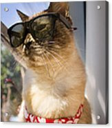 Hot Nermal Acrylic Print