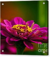 Hot Pink Is In For Summer Acrylic Print