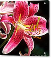 Hot Pink Lily Acrylic Print