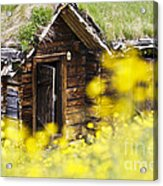 House Behind Yellow Flowers Acrylic Print