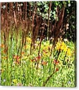 How Does Your Garden Grow.. Acrylic Print