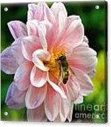 How Sweet In Pink Acrylic Print