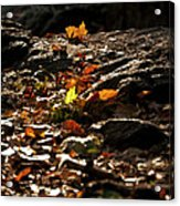 How We Should Leave... Acrylic Print