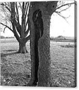 Howling Tree Acrylic Print